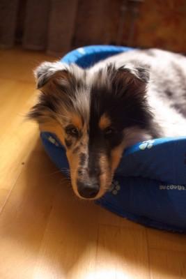 че пристали, не видите, собака спать собрался - 001.JPG