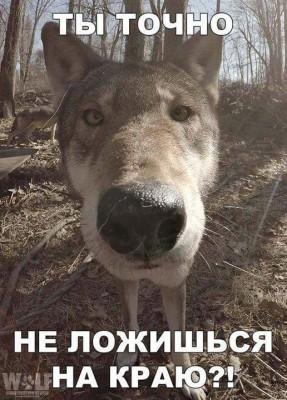 ЮмАр - FB_IMG_1520283937935.jpg