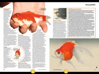 Есть такие рыбки Сабао и Тамасаба - 22195370_1522209154489426_9066931338087200967_n.jpg