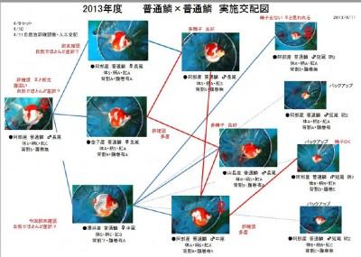 Есть такие рыбки Сабао и Тамасаба - 5.JPG