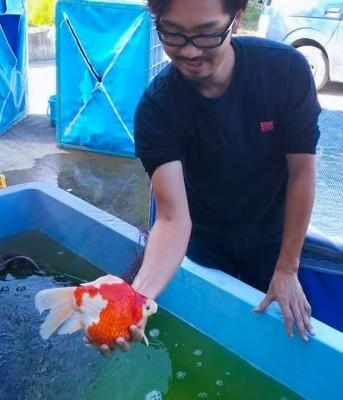 Есть такие рыбки Сабао и Тамасаба - 8jApWVFCmYc.jpg
