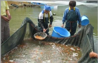 Есть такие рыбки Сабао и Тамасаба - 12.JPG