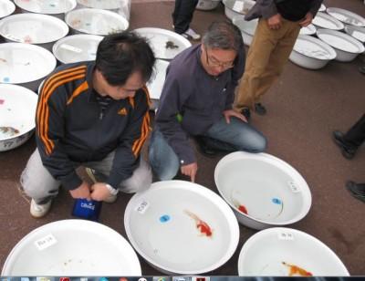 Есть такие рыбки Сабао и Тамасаба - 15..JPG