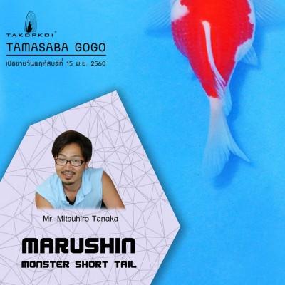 Есть такие рыбки Сабао и Тамасаба - 19059153_1511552052222919_7551497139375807170_n.jpg