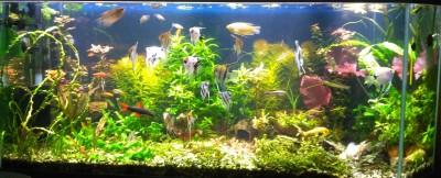 15 лет спустя или снова аквариум - IMG_20180330_154754.jpg