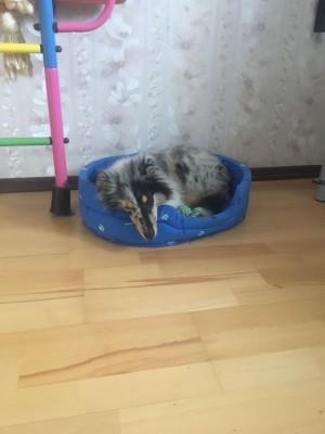 В лежанке спит только днем. Ночью - на полу за шторой. - 002.JPG