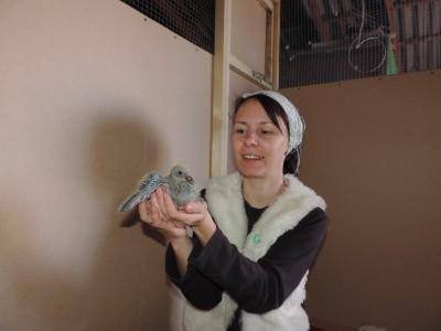Кто нибудь голубей держит? - DSCN0553.JPG
