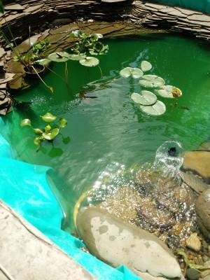 Как мы построили свой пруд (Выселки) - 20180728_135921.jpg