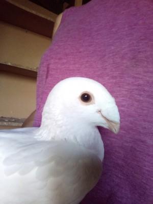 Кто нибудь голубей держит? - image1.jpg
