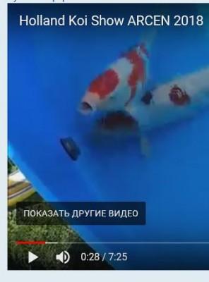 слив из бассейна - подача слив.JPG