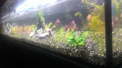 Нужен совет по склеенному аквариуму, помогите - P_20180921_215318.jpg