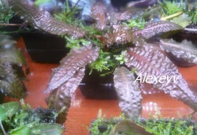 Продам излишки растений - P0193843.jpg