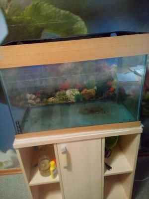 продам аквариум с тумбой и внешний фильтр - 1541874583768-2005974916.jpg