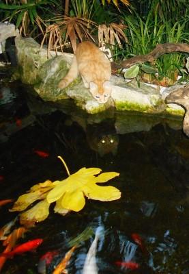 Мини аква-пруд (Адлер) - DSCN4223...........jpg