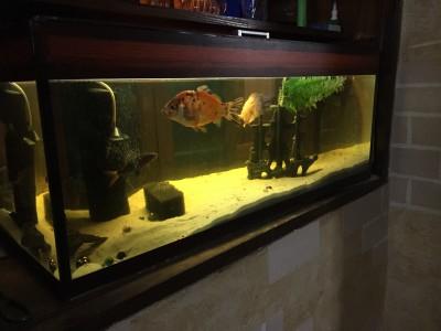 ПРОДАЮ СРОЧНО Аквариум с рыбками 160 литров - 2018-11-26 22.24.53.JPG