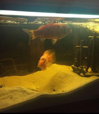 ПРОДАЮ СРОЧНО Аквариум с рыбками 160 литров - 2018-12-05 08.53.02.png