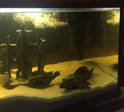 ПРОДАЮ СРОЧНО Аквариум с рыбками 160 литров - 2018-12-05 08.53.10.png
