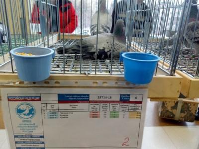 Кто нибудь голубей держит? - щ.jpg