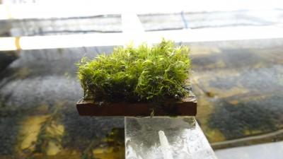 растения - DSC00581.JPG