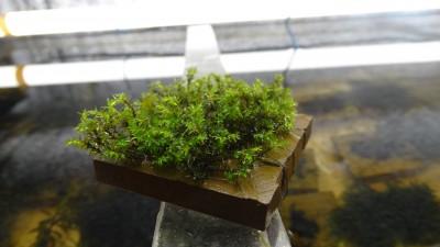 растения - DSC00585.JPG