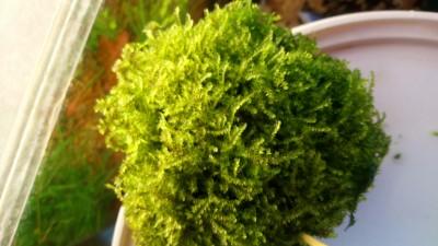 растения - DSC_0324.JPG