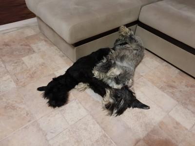 Пополнение в собачьей стае !!!! - IMG-4bea2debe4ed21ab586c045b8cac70da-V.jpg