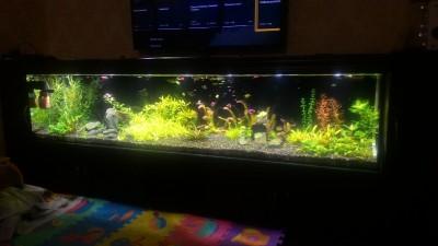 Нужен совет по склеенному аквариуму, помогите - P_20190203_185316.jpg