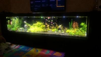 Нужен совет по склеенному аквариуму, помогите - P_20190203_185312.jpg