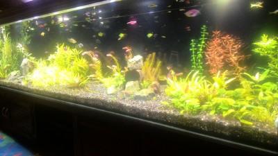Нужен совет по склеенному аквариуму, помогите - P_20190203_185251.jpg