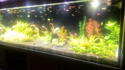 Нужен совет по склеенному аквариуму, помогите - P_20190203_185243.jpg