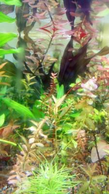 растения - DSC_0227.JPG