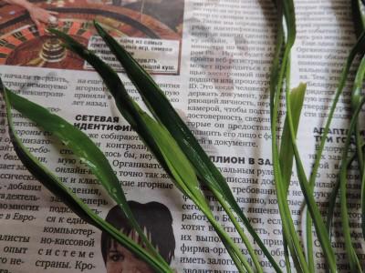 Куплю/продам/подарю Рыбку или Растение - DSCN2368.JPG