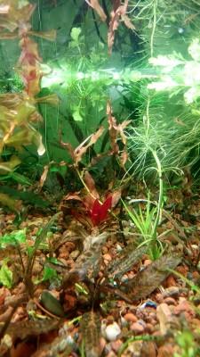 растения - DSC_0585.JPG