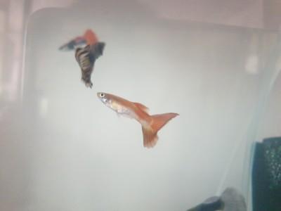 Жители двух аквариумов на 50 литров - 20190615_073716.jpg