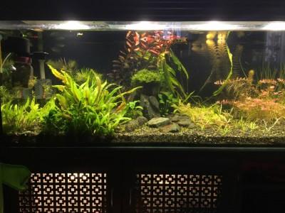 Нужен совет по склеенному аквариуму, помогите - IMG-20190709-WA0006.jpg