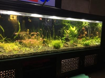 Нужен совет по склеенному аквариуму, помогите - IMG-20190709-WA0007.jpg