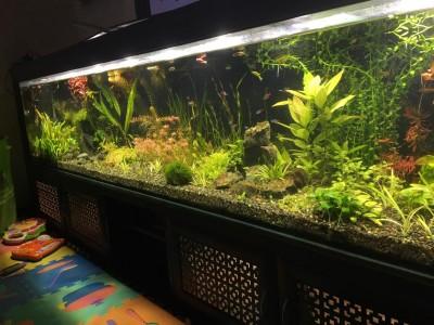Нужен совет по склеенному аквариуму, помогите - IMG-20190709-WA0009.jpg