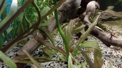 Помогите опознать растение - IMG_20190719_115359.jpg