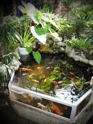 Мини аква-пруд (Адлер) - DSCN2639...........jpg