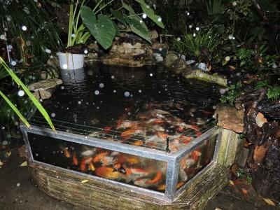 Мини аква-пруд (Адлер) - DSCN2715....jpg