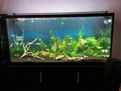 Аквариум на 200 литров взамен двух 50 литровых аквариумов - 20190822_165512.jpg