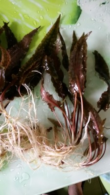 растения - DSC_0531.JPG