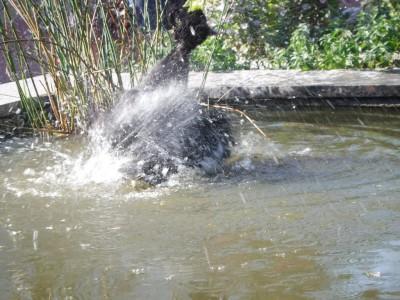 Рыбы в шоке! - DSCF3386.JPG