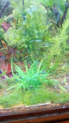 Куплю/продам/подарю Рыбку или Растение - DSC_0142.JPG