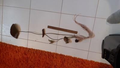 Куплю/продам/подарю Рыбку или Растение - IMG-20200114-WA0011.jpeg
