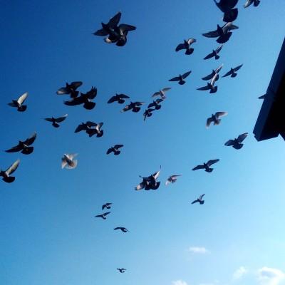 Кто нибудь голубей держит? - IMG_20200317_171502.jpg