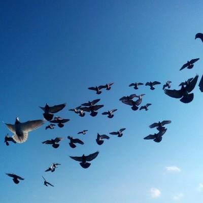 Кто нибудь голубей держит? - IMG_20200317_171550.jpg