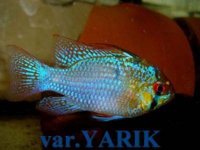 Ярики (Yarik) - DSC04194.JPG