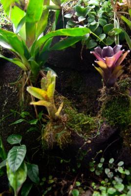 Флорариумы, палюдариумы, орхидариумы и прочие - c8a420bb7ede 3.jpg