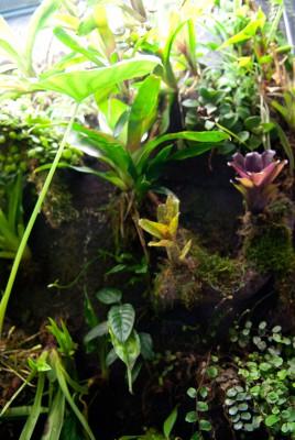 Флорариумы, палюдариумы, орхидариумы и прочие - e72615f42cf3  4.jpg